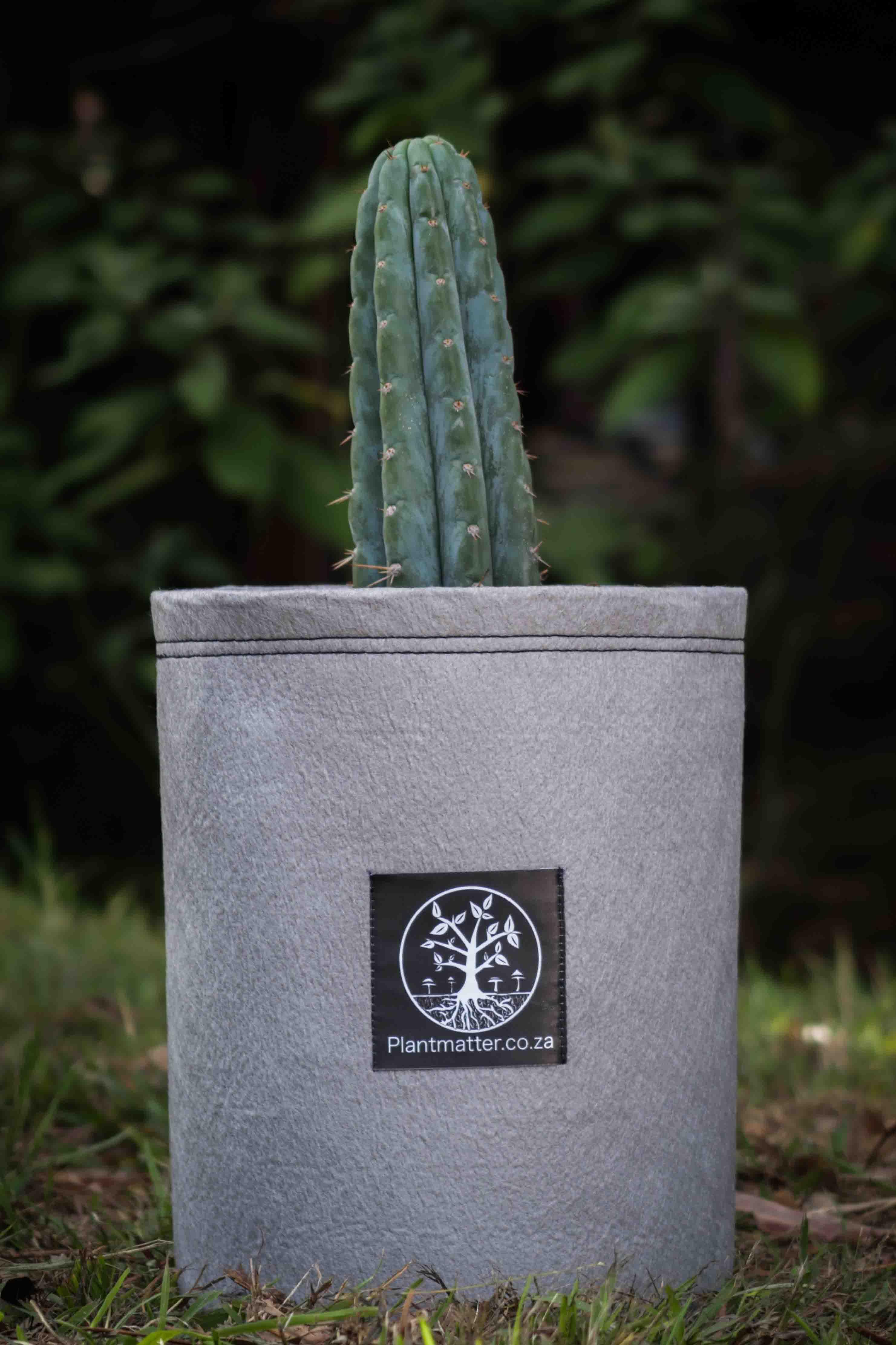 cactus bag