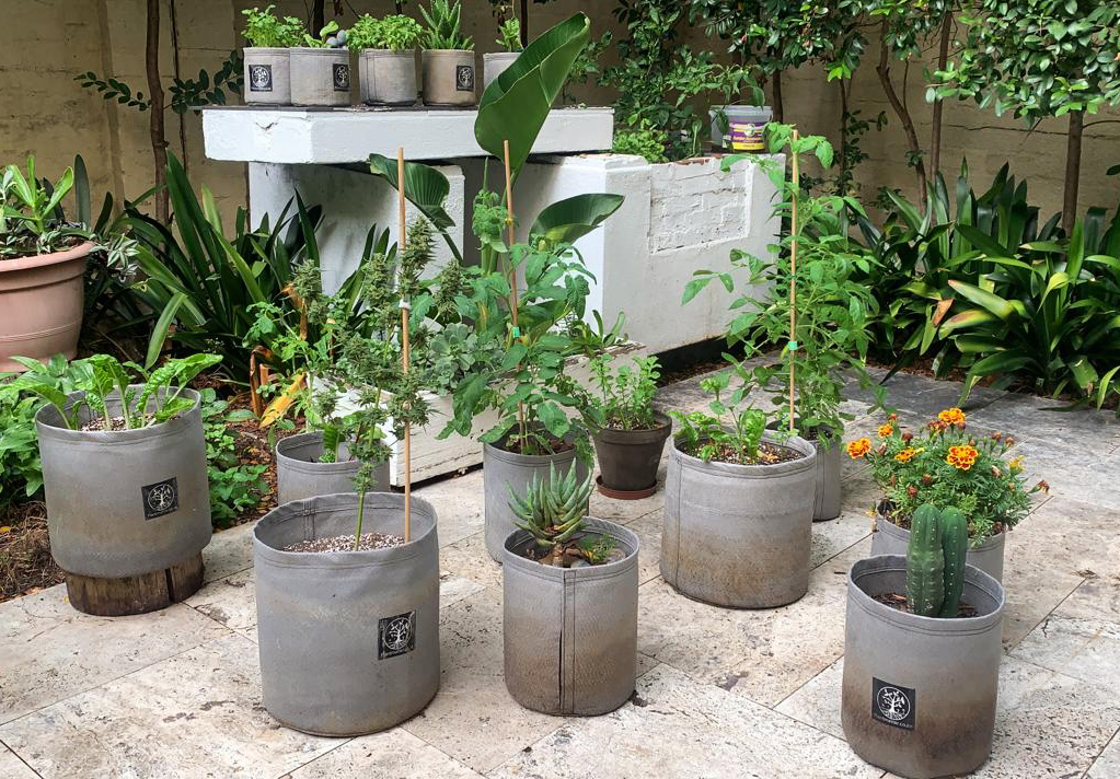 Plant-Matter